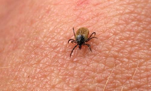 Capitol Exterminating Ticks 3